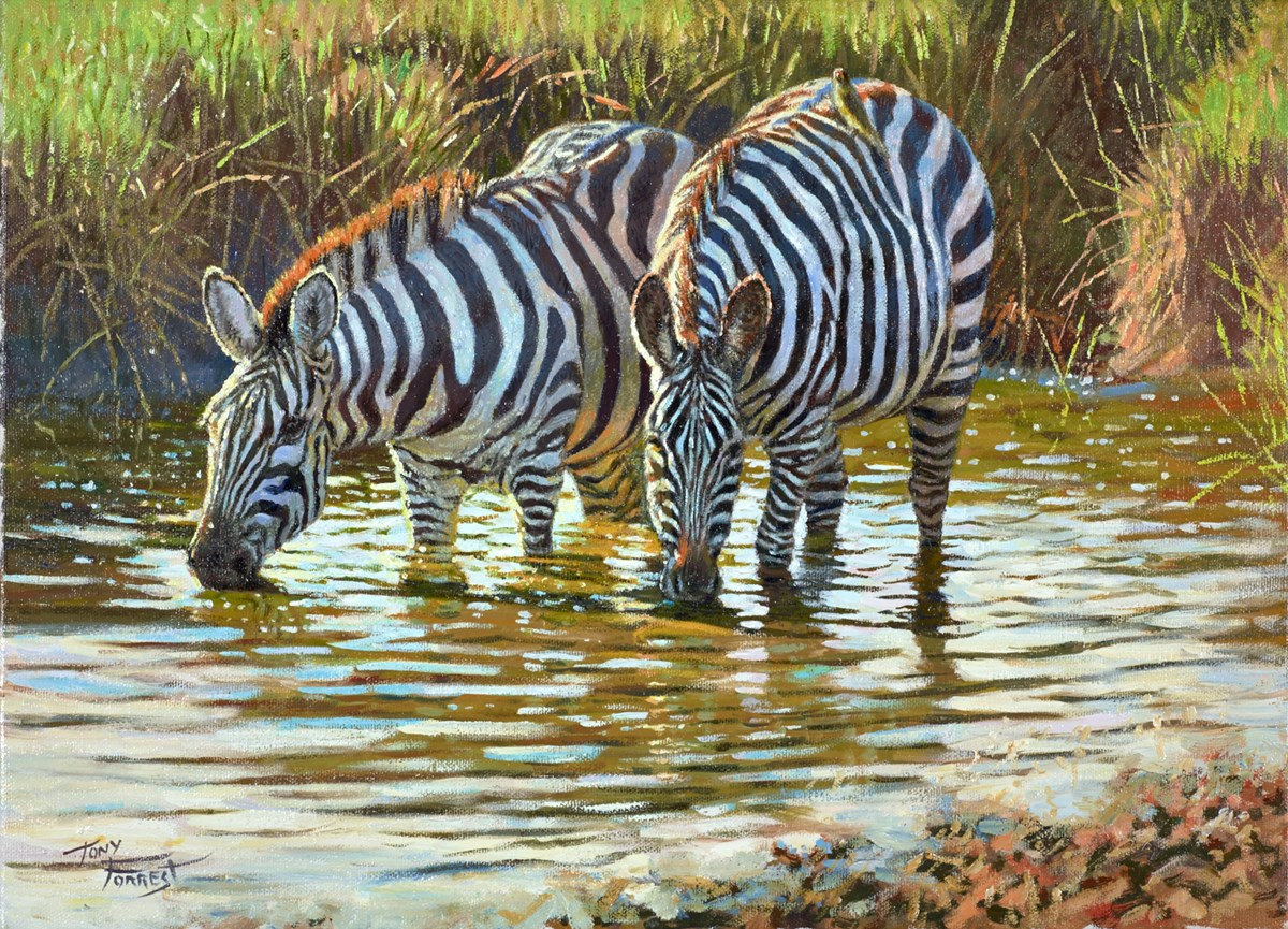 Two Zebras Together by tony forrest -  sized 16x12 inches. Available from Whitewall Galleries